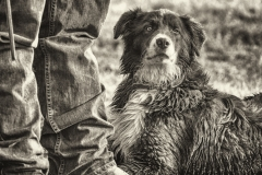 5Massi_Ready-Ranch-Dog