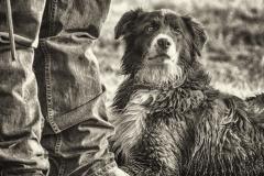 5Massi_Ready-Ranch-Dog